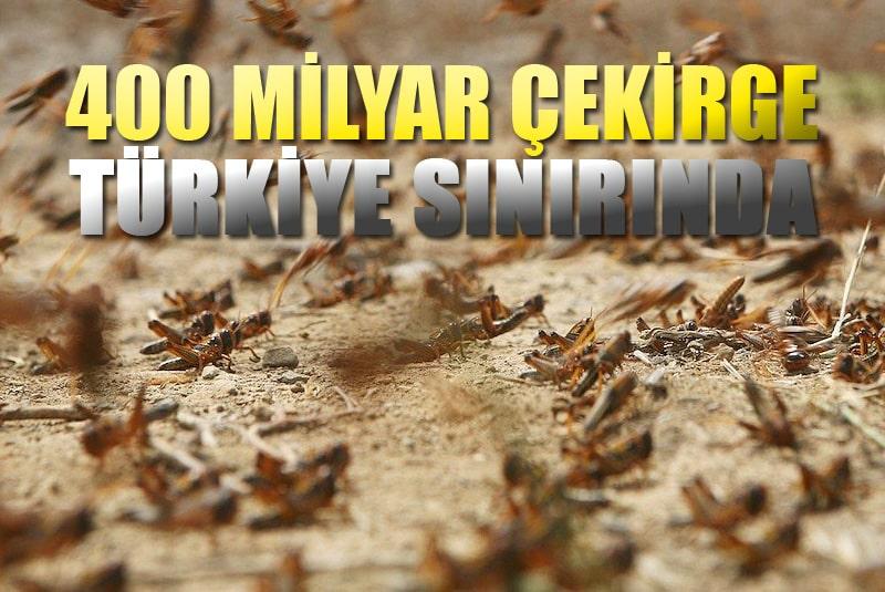 400 Milyar çekirge Türkiye sınırına dayandı