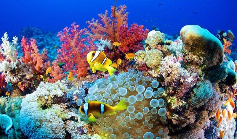 Mercan Resifleri ve Denizdeki Canlılığın Geleceği