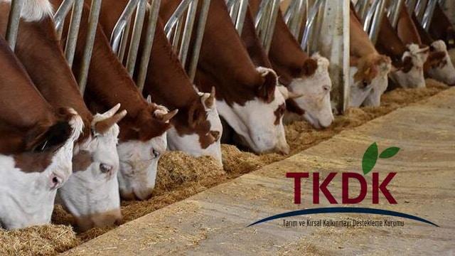 TKDK Geri Ödemesiz Hayvancılık Kredisi Nasıl Alınır?