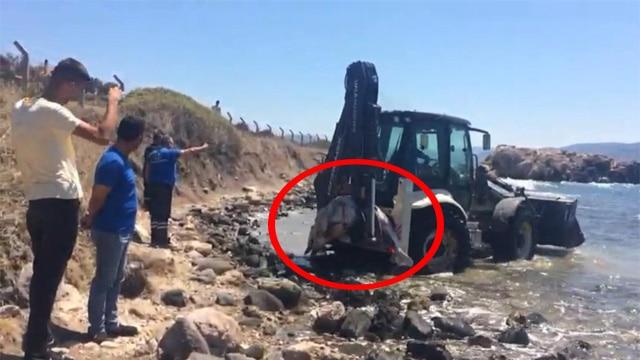 İzmir Urla'da 2 günde 4 Yunus balığını vurarak öldürdüler!
